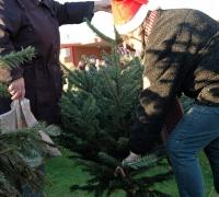 k-Weihnachtsbaumverkauf 0002