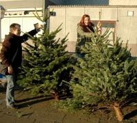 k-Weihnachtsbaumverkauf 0006